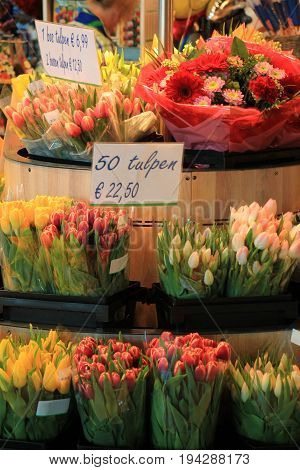 Tulips at a Dutch tourist shop (text on tag: price and product information in Dutch)