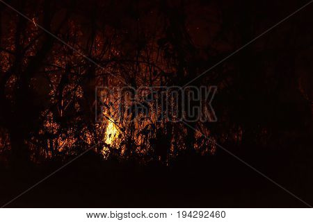 danger nature environment disaster, wildfire, forest burning