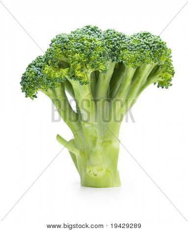 Broccoli standing isolated on white
