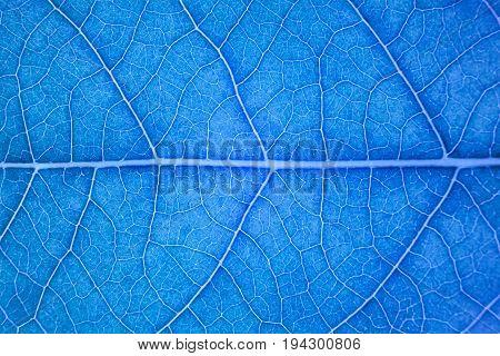 Blur blue leaf texture for background indicating UV pollution and modernization