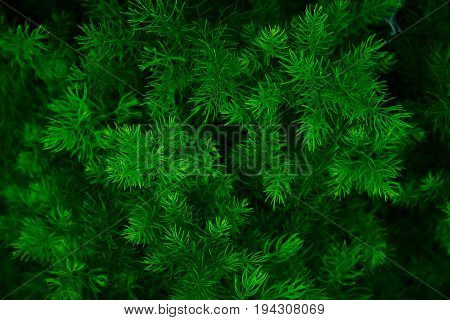 Green leaf background pattern,Green leaf background pattern