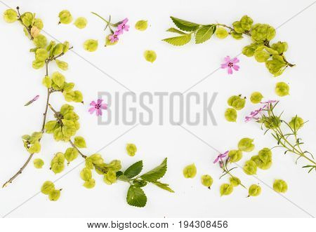 Elm Seeds And Pink Flowers