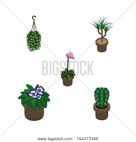 Isometric Flower Set Of Grower, Peyote, Blossom And Other Vector Objects. Also Includes Plant, Flowerpot, Cactus Elements.