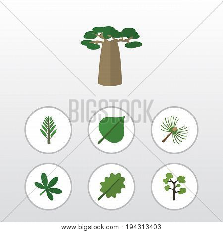 Flat Icon Natural Set Of Baobab, Jungle, Alder And Other Vector Objects. Also Includes Timber, Leaf, Oaken Elements.