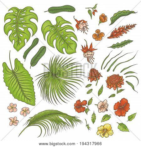 Vector sketch colored texture set of isolated elements. The green leaves of tropical plants, exotic pink and red flowers buds. Graphic outline drawing collection herb and vegetation monsoon rainforest