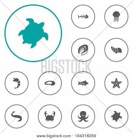 Set Of 12 Seafood Icons Set.Collection Of Acne, Tortoise, Sink And Other Elements.