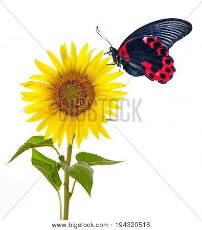 a tropical butterfly and flowers - close up