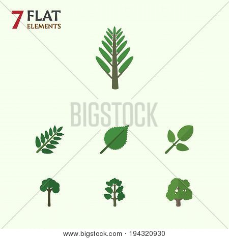 Flat Icon Nature Set Of Acacia Leaf, Evergreen, Decoration Tree And Other Vector Objects. Also Includes Evergreen, Tree, Leaves Elements.