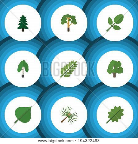 Flat Icon Nature Set Of Park, Timber, Alder And Other Vector Objects. Also Includes Alder, Hickory, Tree Elements.