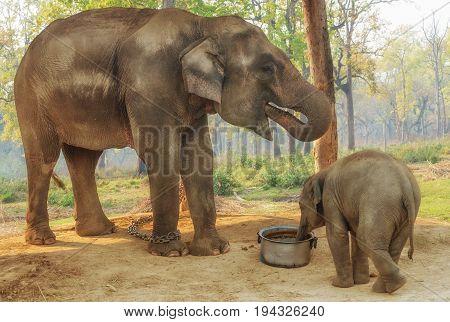 Elephant Breeding Centre in Chitwan National Park, Nepal