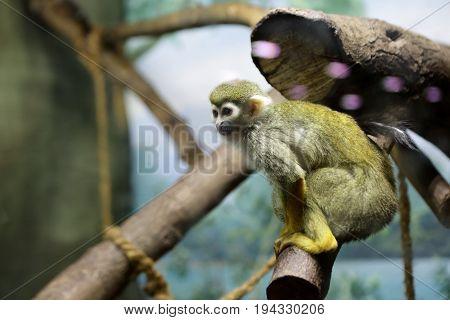 Monkey on a stick in a zoo