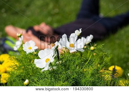Young man lying between flowers in the grass