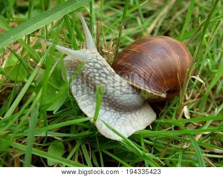 A snail in the garden on the grass