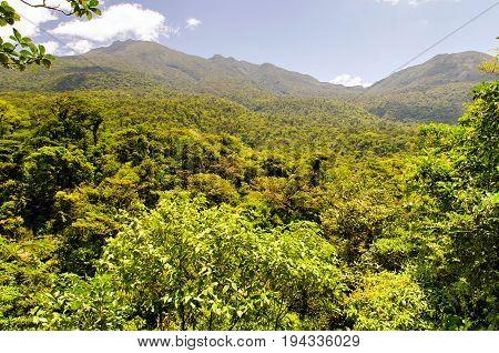 Mountain cloud rainforest canopies in Central America, Costa Rica, Santa Elena.