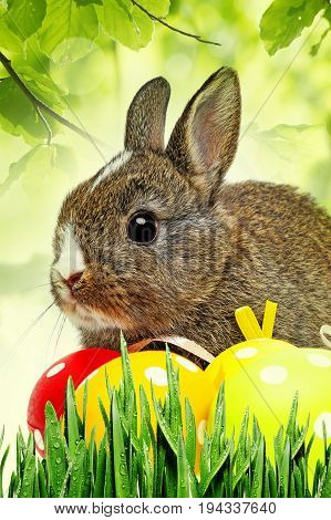 a cute little baby rabbit close up