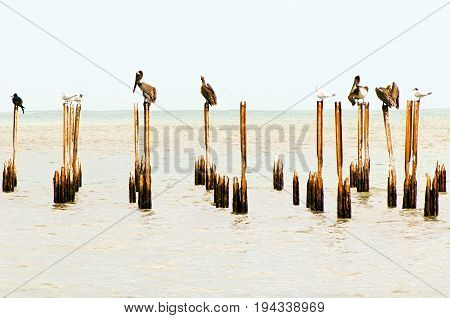 Water birds perching on deserted docks (Costa Rica, Cahuita national park).