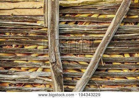Ripe yellow corn in the barn close up.
