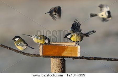 titmouse birds eating seed from bird feeder