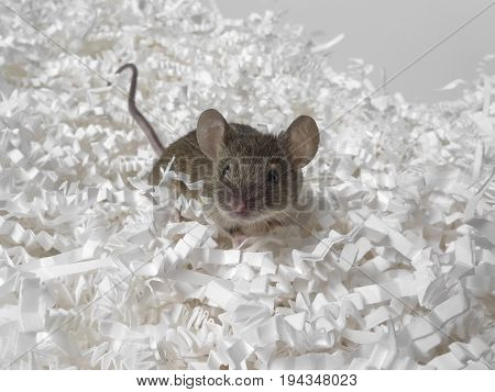 mouse and paper - a destruction concept