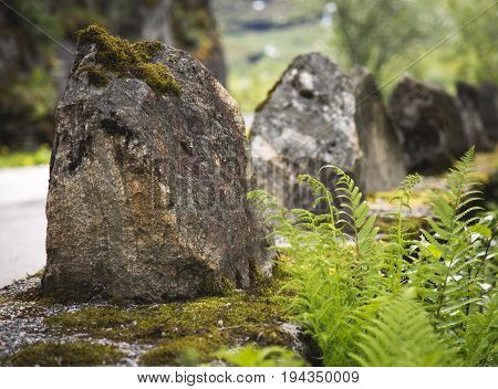 Fern growing near stone trolls in Norway. geirangerfjord