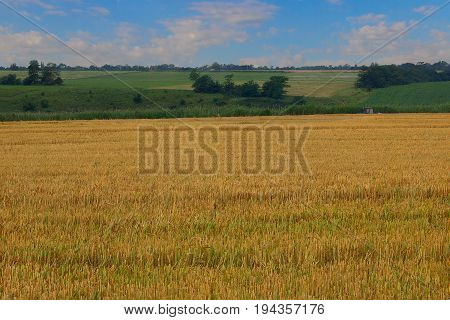 The agricultural field after cleaning of grain. In the foreground a yellow eddish and in the distance the hilly area with bushes and trees and also the blue sky with white clouds. Krasnodar Krai.