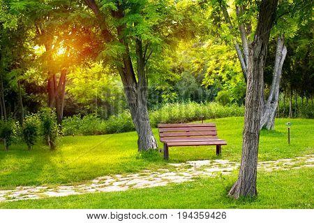Warm Evening In Summer Park