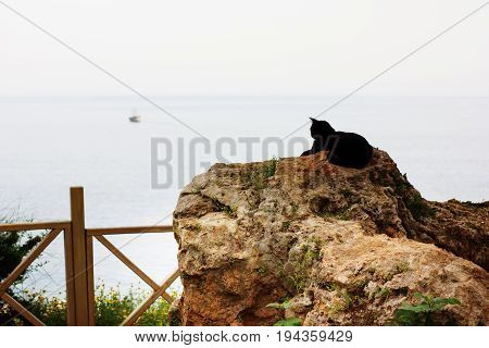 Black Cat Sitting On A Stone Looking At Sea