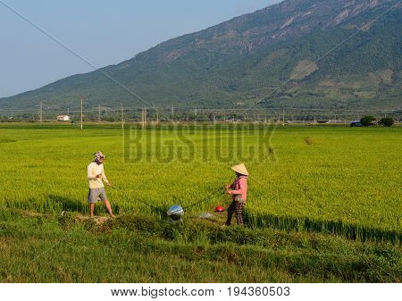 Rice Field In Mekong Delta, Vietnam