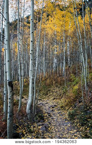 Hiking trail at Maroon Bells in Aspen, Colorado.