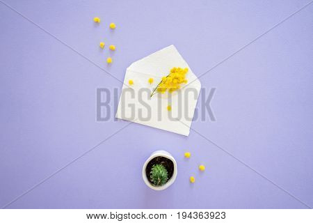 Yellow mimosa flower sticks out of handcrafted little white envelope with mini cactus isolated on lilac background top view.