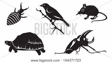 Africa's Little Five: Elephant Shrew Ant-lion Leopard Tortoise Buffalo Weaver Bird and Rhino Beetle.