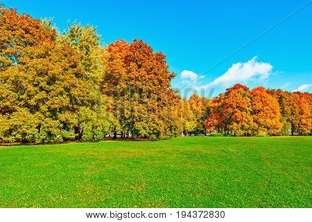 Autumn view of the city park at sunny day time.