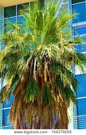 Palm Tree beside a modern contemporary style building taken in Palm Springs, CA