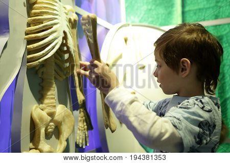 Boy Studying Human Anatomy