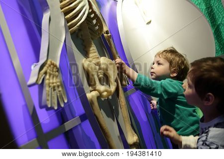 Children studying human anatomy in a classroom