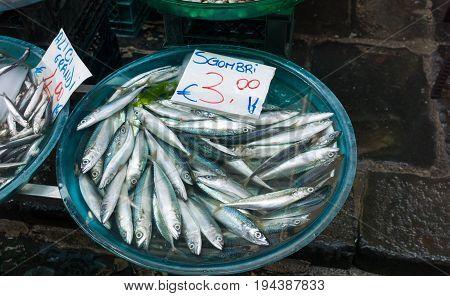 Fish Exposed In Market