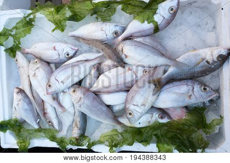 Fish exposed in open market in Napoli