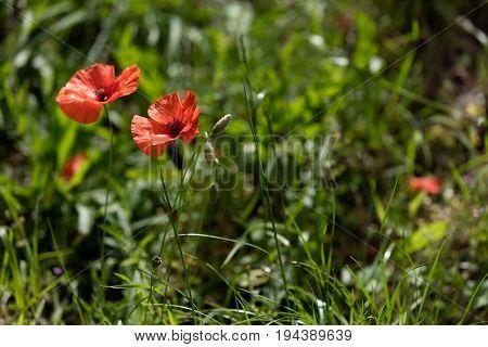 Isolated Flower On Black Backround