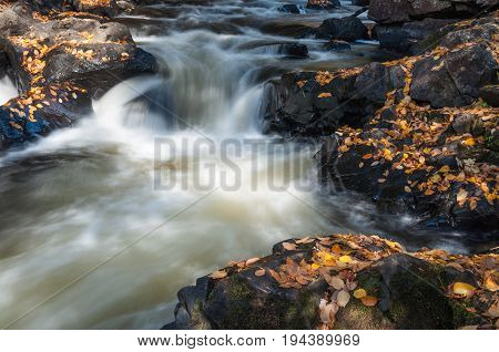 Water stream with autumn leaves. Ontario Canada