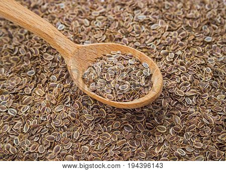 Background of dried dill seeds. Dill weed in wooden spoon.