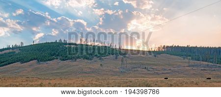 Buffalo silhouettes below Sunbeams and sunrays through sunset clouds in the Hayden Valley in Yellowstone National Park in Wyoming USA