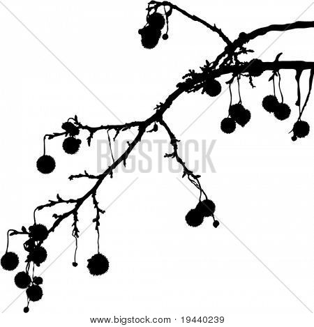 branch with fruit silhouette vector