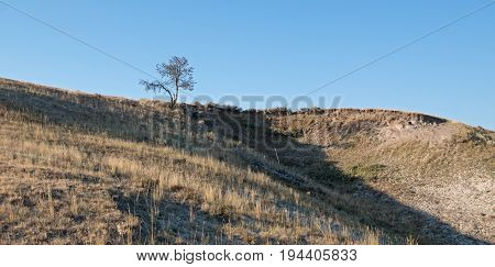 Lone Tree On Bluff Above The Yellowstone River In The Hayden Valley In Yellowstone National Park In