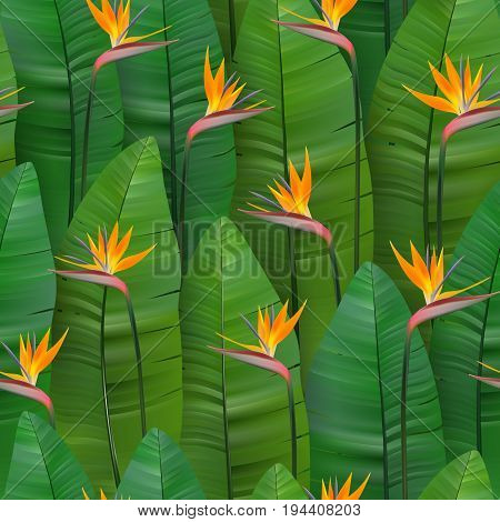 Seamless tropical pattern with strelitzia. Vector illustration. Realistic tropical plants seamless background. Green leaf and orange flowers.