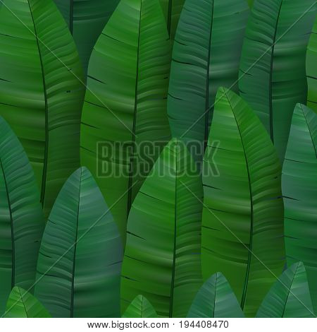 Seamless tropical pattern with banana leaves. Vector illustration. Saturated green tone.