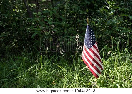 American flag in sunlight and summer weeds