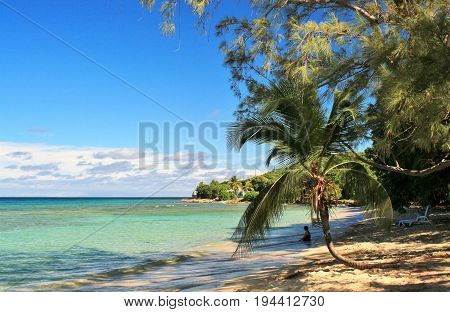 Beautiful blue ocean background with a palm tree frond