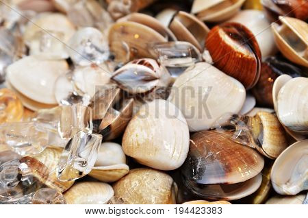 Clams On Seafood Market Display