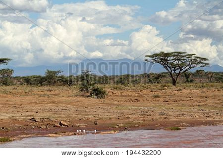 Palm trees on the banks of the Samburu River