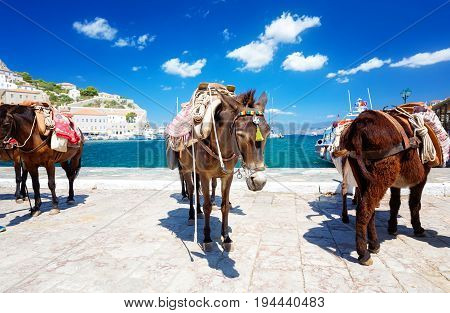 Travel Greece. Donkeys and Horses the only means of transport at Hydra island Saronic Gulf Greece poster